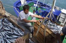 Рецидив «Мараби», или Есть ли жизнь в рыбной отрасли Дагестана